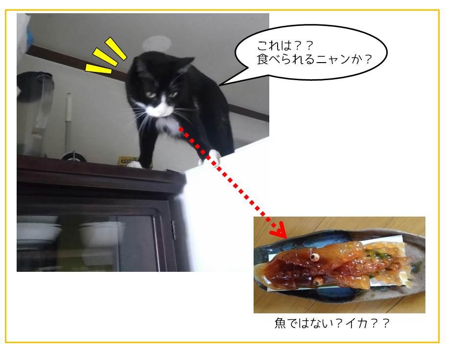 食べられるかな?